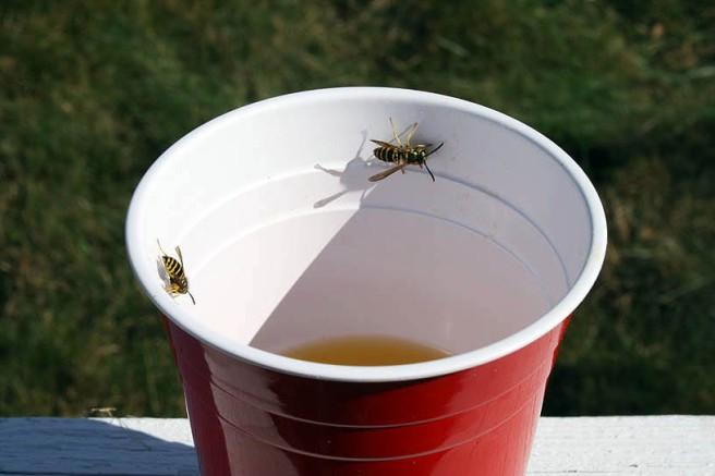 agua-bees