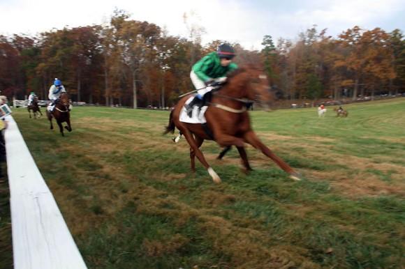 horse-blurry