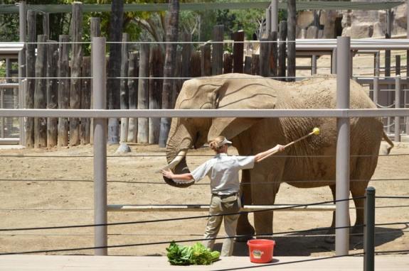 safaripark-elephant